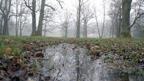 Vista cênico e pitoresca do parque de Kadriorg na manhã video estoque