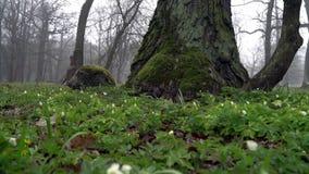 Vista cênico e pitoresca do parque de Kadriorg na manhã vídeos de arquivo