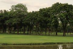 Vista cênico em um parque por um lago foto de stock