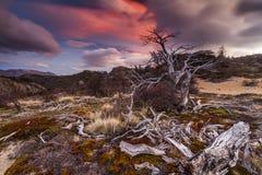 Vista cênico nas montanhas do Patagonia fotografia de stock
