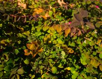 Vista cercana de las hojas de diversos colores imágenes de archivo libres de regalías