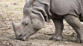 Vista cercana de un rinoceronte metrajes
