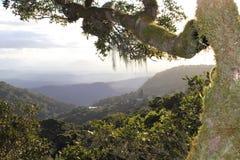 Vista in cima ad un albero gigante Immagini Stock