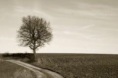 Vista classica, un albero durante l'inverno Fotografia Stock