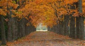 Vista. This is colorful vista in Caucasus garden in autumn Royalty Free Stock Photos