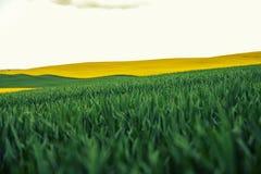 Vista colorida de plantas de florescência da colza e rural bonitos Fotos de Stock Royalty Free