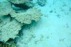 Vista colorida del mundo subacuático Los arrecifes de coral muertos, la hierba del mar, la arena blanca y la turquesa riegan El O Imagenes de archivo