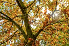 Vista Colourful del sole di autunno che scoppia attraverso un albero di autunno fotografie stock libere da diritti