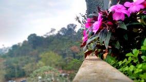 Vista cor-de-rosa Imagens de Stock Royalty Free