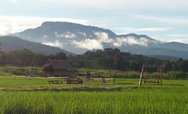 Vista corrente su Huay Tueng Tao fotografia stock
