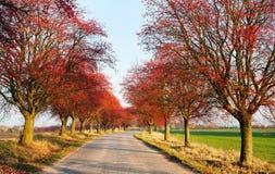 Vista d'autunno del vicolo del chokeberry Fotografia Stock Libera da Diritti
