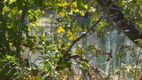 Vista da água da lagoa através das folhas e dos ramos vídeos de arquivo