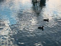 A vista da borda do lago fotos de stock royalty free