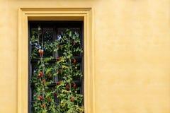 Vista da casa na janela que crescem tomates de cereja imagem de stock royalty free