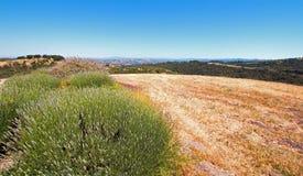 Vista da cidade de Paso Robles do vinhedo da parte superior do monte no Central Valley de Califórnia EUA Foto de Stock Royalty Free