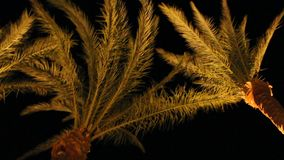 Vista da completare delle palme da datteri dal fondo alla notte Rami della palma da datteri illuminati da sotto archivi video