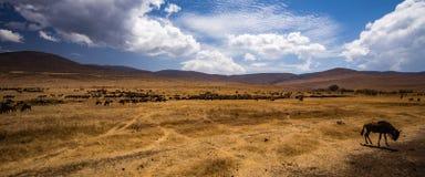 Vista da cratera de Ngorongoro Imagens de Stock