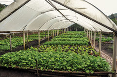 Vista da estufa com os vegetais que estão sendo processados perto da cidade de polis do ³ de Joanà Imagem de Stock Royalty Free