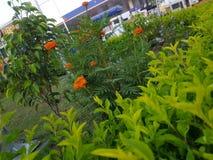 Vista da flor no lado da bomba de gasolina imagens de stock royalty free
