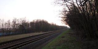 Vista da floresta à estrada de ferro fotografia de stock royalty free
