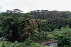 Vista da floresta úmida de Kauai no inverno no crepúsculo imagem de stock royalty free