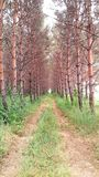 Vista da floresta Fotografia de Stock