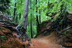 Vista da floresta deciduous fotos de stock royalty free
