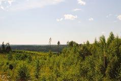Vista da floresta densa fotografia de stock royalty free
