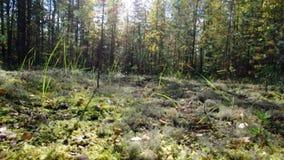 Vista da floresta do europeu do outono filme