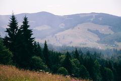 Vista da floresta nas montanhas Carpathian a inclinação a montanha e as vistas bonitas Fotografia de Stock