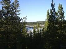 vista da floresta a uma lagoa fotos de stock