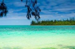 Vista da ilha tropical da selva da floresta tropical com pinheiros fotos de stock royalty free