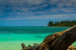 Vista da ilha tropical da selva da floresta tropical com pinheiros imagem de stock royalty free