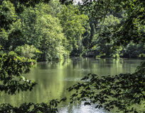 Vista da lagoa através dos ramos de árvore Fotos de Stock Royalty Free