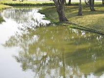 Vista da lagoa verde Foto de Stock