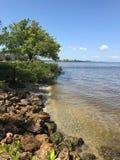 Vista da linha costeira do rio em Fort Myers, Florida, EUA Fotos de Stock
