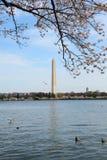 Flor de cerejeira 4 da C.C. Fotografia de Stock Royalty Free