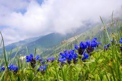 Vista da Medeu, il Kazakistan Immagine Stock