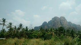 Vista da montanha com cacho e folhas imagens de stock royalty free