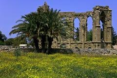 Vista da parede antiga com flores e palma da mola Foto de Stock