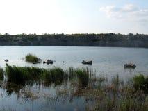 Vista da pedra pelo lago Fotografia de Stock