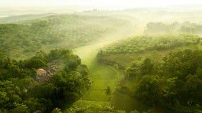 A vista da plantação do óleo de palma e o arroz colocam foto de stock