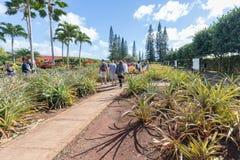 Vista da plantação do abacaxi de Dole em Wahiawa, destino da excursão imagem de stock royalty free