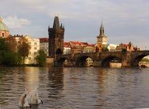 Vista da ponte de Charles sobre o rio de Vltava em Praga com as duas cisnes na parte dianteira Fotos de Stock Royalty Free