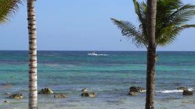 Vista da praia tropical através das palmeiras do coco Barco do parasailing do passeio dos turistas com paraquedas Água de turques vídeos de arquivo