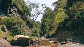 Vista da selva na garganta do rio video estoque