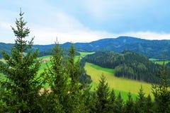 Vista da Skywalk in Wipfelwanderweg Rachau in Austria Fotografia Stock