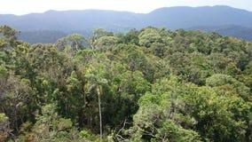 Vista da sopra - la foresta pluviale di sinharaja immagine stock