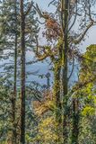 Vista da torre do palácio de Buçaco no meio das árvores fotos de stock royalty free