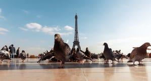 Vista da torre Eiffel do Trocadero fotografia de stock